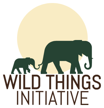 Revisiting Botswana S Decision To Lift The Elephant Hunting Moratorium Wild Things Initiative